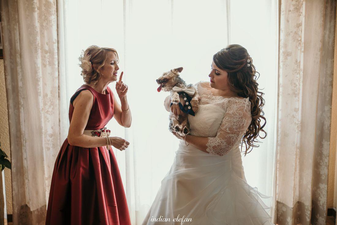 novias con perro